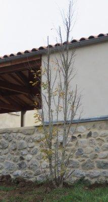 L'arbre de Jacques Hopen