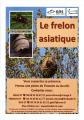 Le frelon asiatique